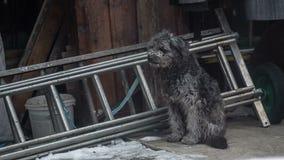 Унылая собака получила холодное снаружи сток-видео