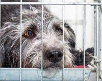 Унылая собака спасения лежа в клетке провода Стоковое Фото