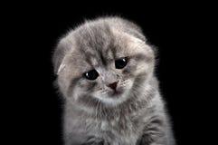 унылое котенка сиротливое Стоковое Изображение RF