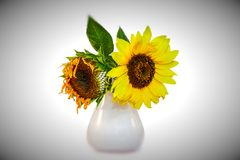 Унылые цветки Стоковое фото RF