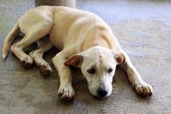 Унылый белый щенок лежит на мостоваой на улице Стоковые Изображения RF