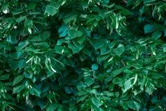 Унылый зеленый зеленый цвет фона выходит обои Стоковые Изображения