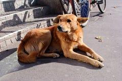 Унылая красная ложь собаки стоковое фото