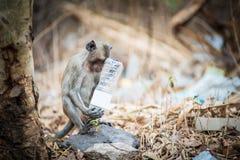 Унылая обезьяна Стоковое Изображение