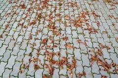 Унылая осень Стоковое Изображение