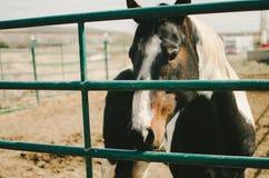 Унылая лошадь за решеткой Стоковые Фотографии RF