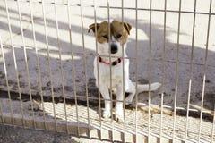 Унылая покинутая собака Стоковая Фотография RF