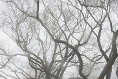 Унылая предпосылка с силуэтом ветвей дерева в тумане Стоковое Фото