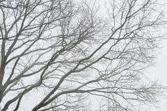 Унылая предпосылка с силуэтом ветвей дерева в тумане Стоковые Фото