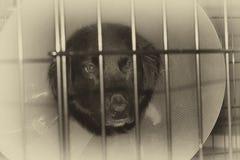 Унылая собака в клетке с конусом на голове Стоковые Фотографии RF