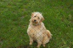 Унылая собака в убежище Стоковое Изображение
