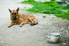 Унылая собака Стоковое Изображение RF