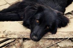 Унылая черная собака кладет дальше outdoors Стоковые Изображения RF