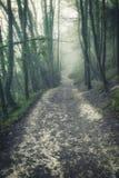 Унылое драматическое туманное падение осени весны ландшафта леса Стоковые Фото