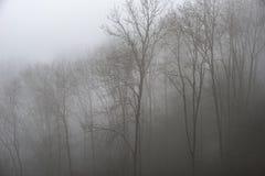 Унылое драматическое туманное падение осени весны ландшафта леса Стоковые Фотографии RF