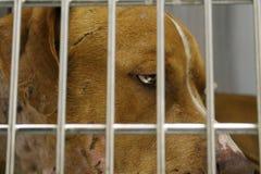 Унылые глаза щенка Стоковые Фото