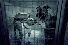 Унылые покинутые собаки Стоковая Фотография RF