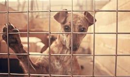 Унылые покинутые собаки Стоковое Фото