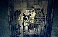 Унылые покинутые собаки Стоковая Фотография