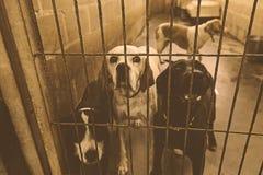 Унылые покинутые собаки Стоковое Изображение RF