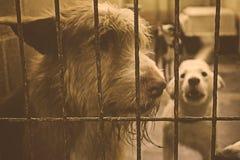 Унылые покинутые собаки Стоковые Фото
