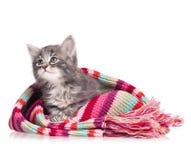 Унылый котенок Стоковые Фотографии RF