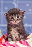 Унылый котенок стоковое изображение rf