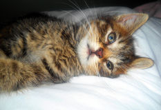 Унылый котенок Tabby лежа на стороне Стоковое Фото