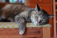 Унылый кот на стуле Стоковое фото RF
