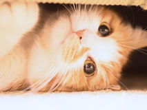 Унылый кот Стоковые Изображения
