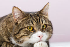 Унылый кот Стоковая Фотография RF