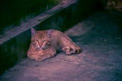 Унылый красный лежать кота Стоковое фото RF