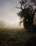 Унылый сельский восход солнца с туманом и росой на траве Стоковое фото RF