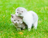2 унылых котят на зеленой траве Стоковые Фото
