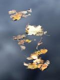 упаденная осень листает желтый цвет реки Стоковое Изображение RF