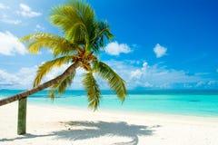 Упаденная пальма Стоковые Изображения