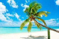 Упаденная пальма Стоковые Фотографии RF