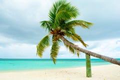 Упаденная пальма Стоковые Фото