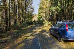Упаденное дерево в дороге леса Стоковые Фотографии RF