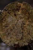 Упаденное дерево в лесе стоковая фотография rf