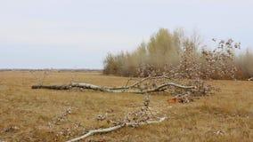 Упаденное дерево в поле акции видеоматериалы