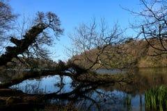 Упаденное дерево в шотландском озере на сумраке стоковое фото