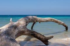 Упаденное дерево на пляже острова Havelock, Andamans Стоковое фото RF