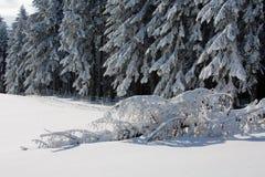 Упаденное дерево покрытое с снежком Стоковые Изображения