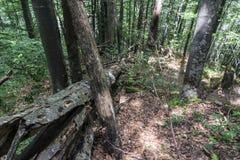 Упаденное дерево после мощной молнии на пути к хате stena Kozya Стоковое фото RF