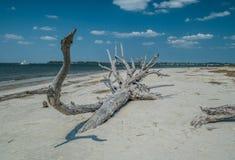 Упаденное дерево распадаясь на пляже стоковые изображения rf