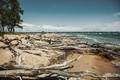 Упаденное дерево с корнями на пляже Стоковая Фотография RF