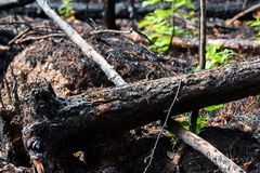 Упаденное, который сгорели дерево стоковое изображение