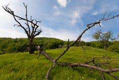упаденное сухое ветви Стоковое Фото