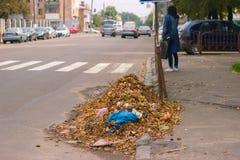 Упаденные высушенные листья коричневого цвета разбросали на дорогу гудронированного шоссе Стоковые Фотографии RF